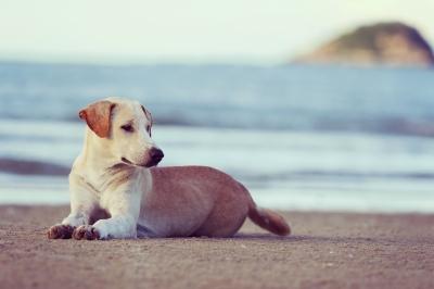 cestovani se psem