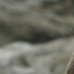 Fauna a Flora na Novém Zélandu